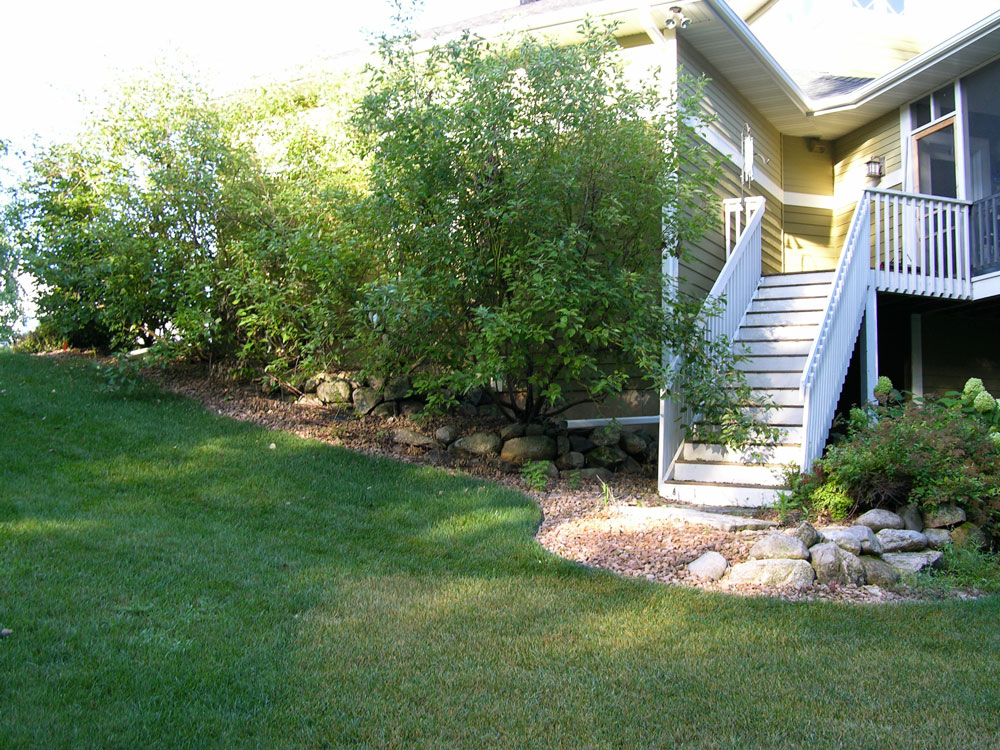 The overgrown and under utilized yard.
