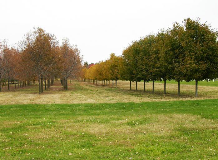 The Yardmasters Landscapes Tree Farm