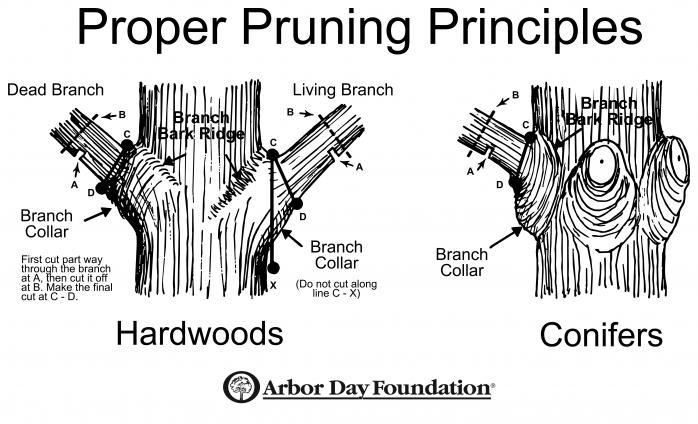 Proper Pruning Principles