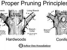 Proper Pruning Principles